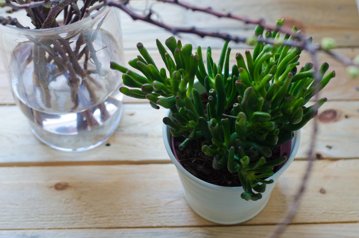 Pflanzen deko wohnzimmer ihr traumhaus ideen for Pflanzen im wohnzimmer