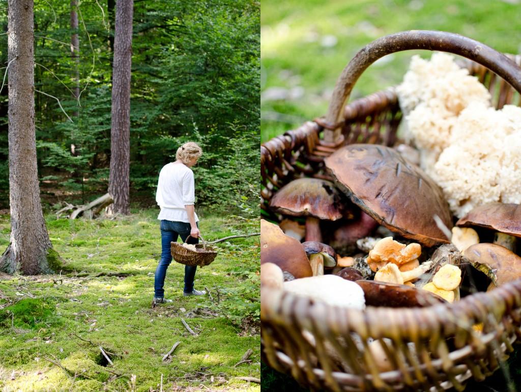 Auf Pilzsuche im herbstlichen Wald und ein Rezept zum Einlegen von Pilzen