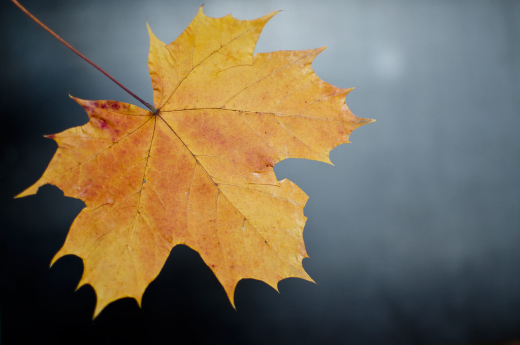 Herbstblatt Fotografie
