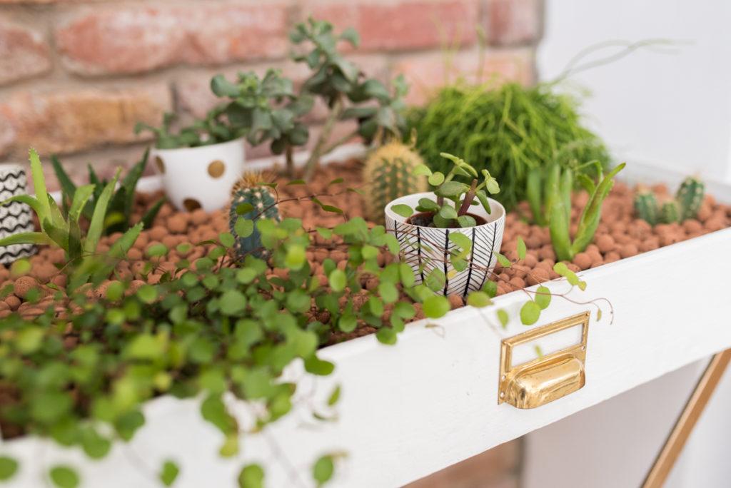 Anleitung für einen selbst gemachten DIY upcycling indoor Garten aus einer alten Schublade im goledenen vintage Look für das Wohnzimmer