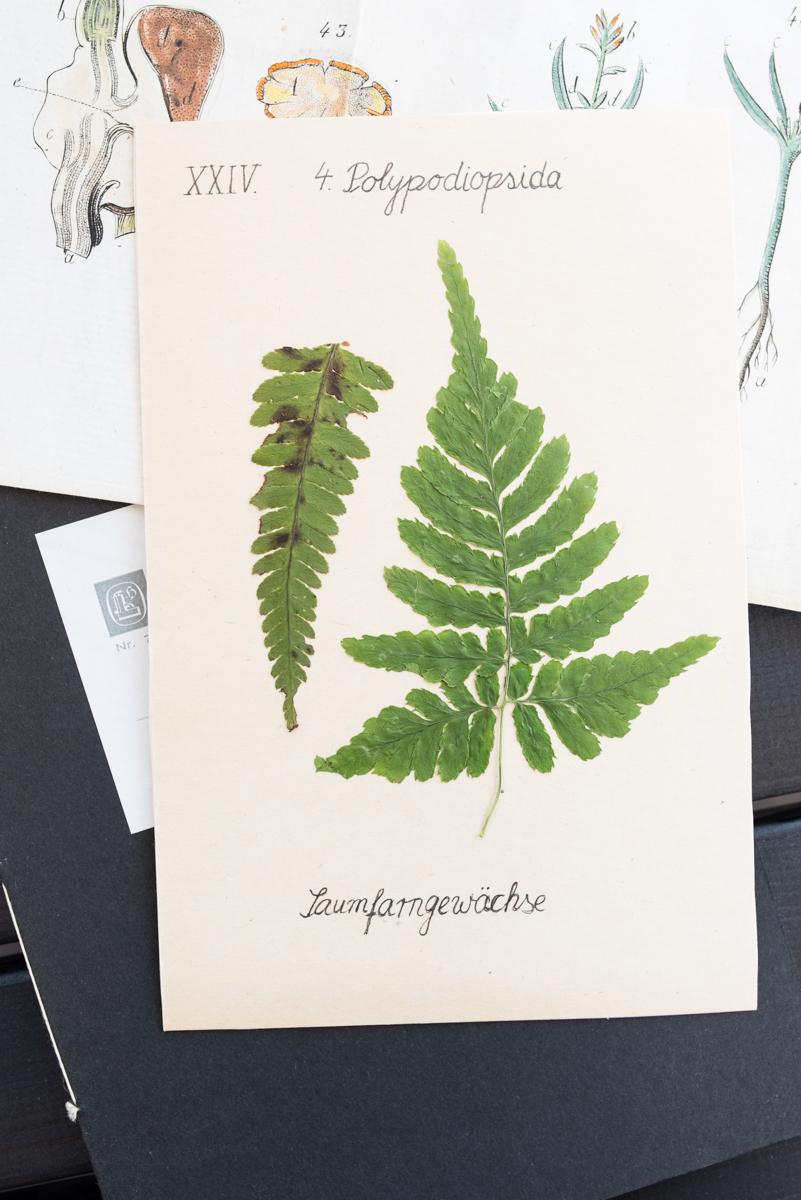 DIY Anleitung für kleine selbst gemachte Notiz Hefte mit Fadenbindung und getrockneten Blättern und Blüten im Botanik-Look
