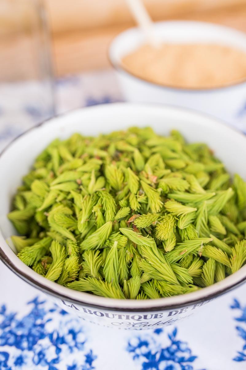 Rezept für leckeren Fichtenwipfel Sirup als Hausmittel für die Erkältungszeit gegen Husten, Schnupfen und Halsschmerzen
