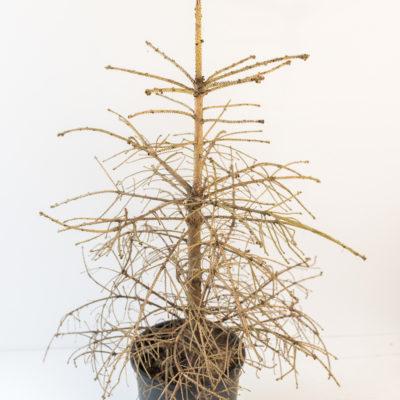 Armer, kleiner Tannenbaum – ein Wintergedicht