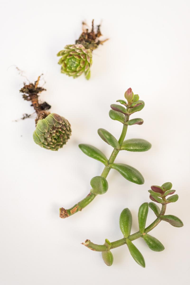 Anleitung für selbst gemachte mini Terrarien für Sukkulenten aus Teelichthaltern mit Sprühlack im Boho vintage Keramik Look als Deko für das Wohnzimmer im urban jungle Stil