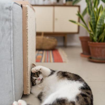 DIY – Katzen-Kratztisch: Couchtisch und Kratzmöbel zugleich