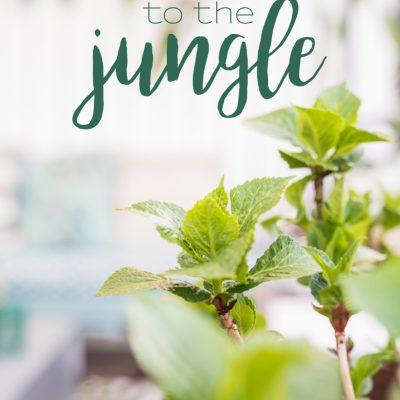 Raus in die Botanik - mein Balkon makeover