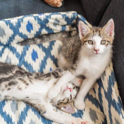 DIY – Katzenbett selber nähen