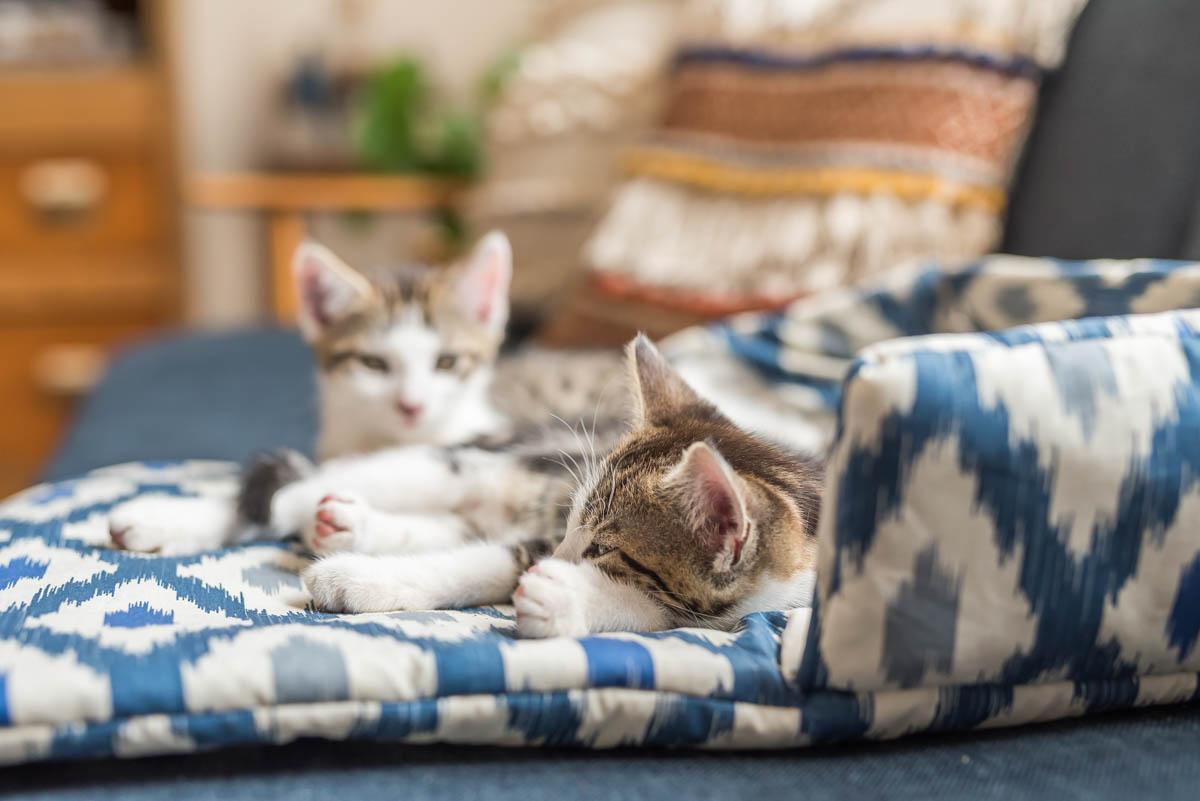 DIY Anleitung in Schritten für ein selbst genähtes Katzenbett aus Stoff mit Vlies zum Kuscheln für Katzen