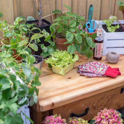 Tipps für den Naschgarten auf dem Balkon