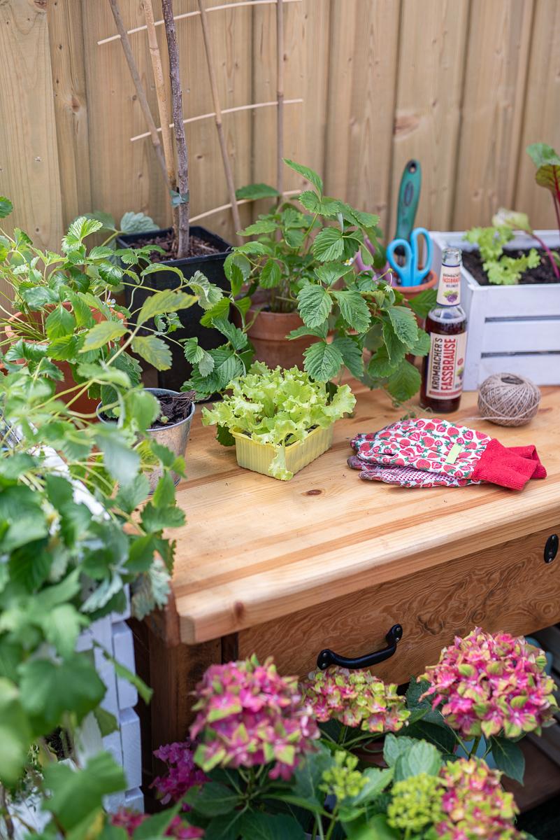 Tipps zum Pflanzen und zur Pflege für den Naschgarten auf dem Balkon mit leckeren Beeren im Topf