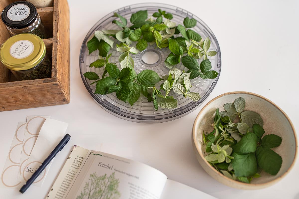 Rezept für selbstgemachten Kräutertee mit Kräutern aus dem Garten in einer Kräutertee Bar zum selbst mischen im Herbst