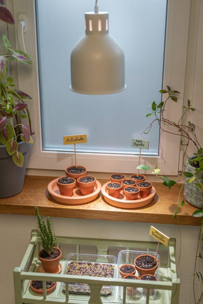 Aussaat vom Tomaten und Gemüsepflanzen im März mit Pflanzenleuchten zur optimalen Lichtversorgung für das Pflanzenwachstum im Frühling