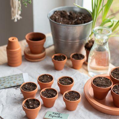 Aussaat von Gemüsepflanzen im März