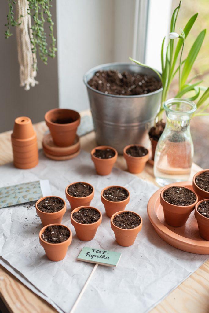 Aussaat vom Tomaten und Gemüsepflanzen im März