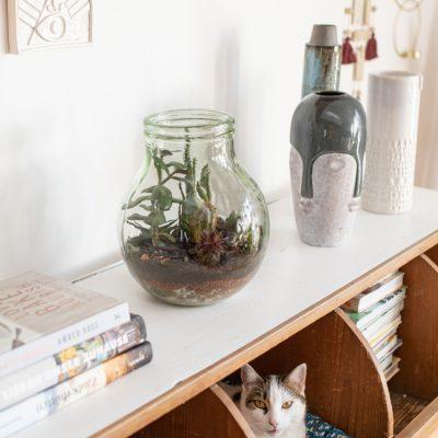 DIY - ein Terrarium im Glas anlegen