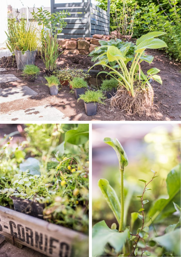 Einen mini Teich im Garten mit Teichbecken ohne Pumpe anlegen mit Tipps zur Pflege und zur Gestaltung mit Pflanzen und Steinen für einen natürlichen Look