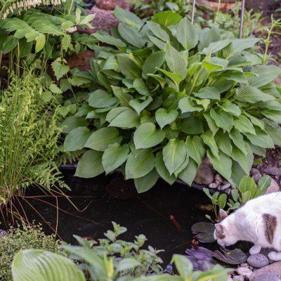 Tipps zum mini Teich im Garten: Standort und Pflanzen für den Halbschatten
