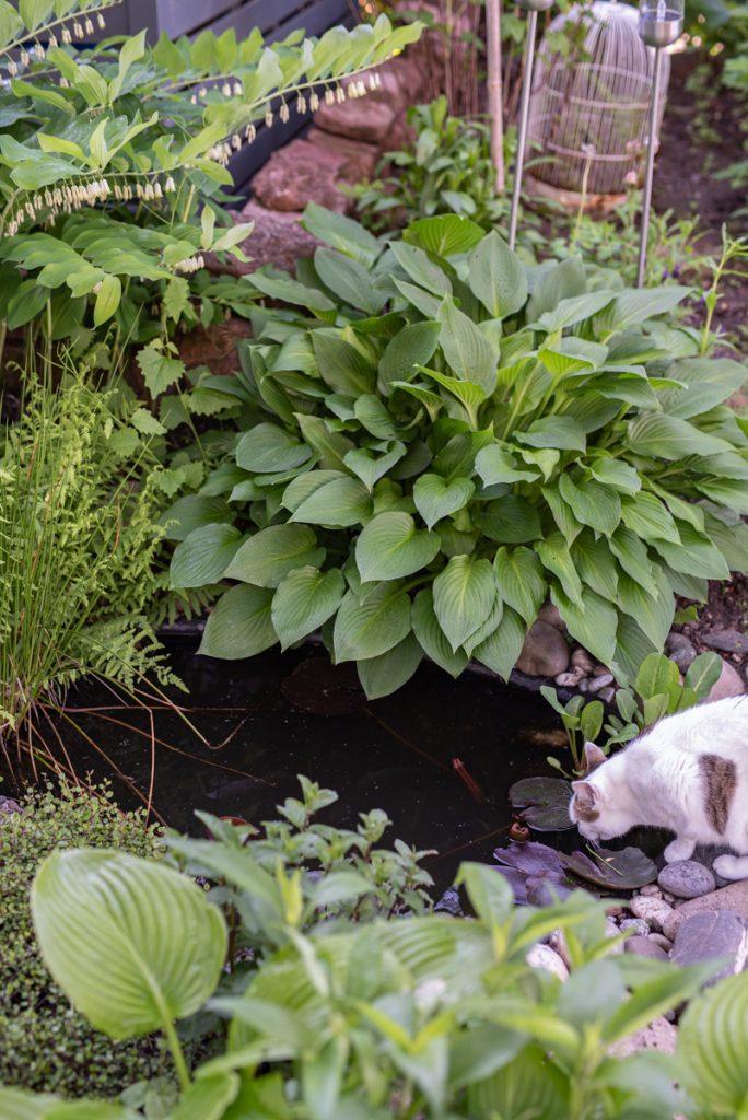 Einen mini Teich im Garten ohne Pumpe anlegen mit Tipps zur Pflege und zur Gestaltung mit Pflanzen