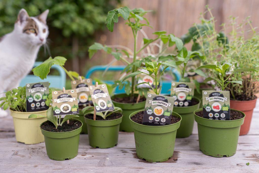Ein Mottobeet zum Thema Grillgemüse anlegen mit Pflanzen von Naturtalent by toom und Tipps zum Aufbau eines Hochbeets und Füllung mit Ästen, Laub und Kompost