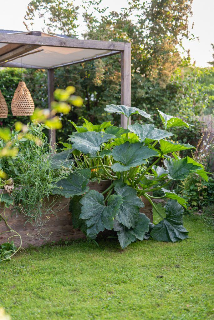 Sommerliches Rezept für eingemachtes Zucchini Chutney mit Rosinen und orientalischer Note aus dem eigenen Garten